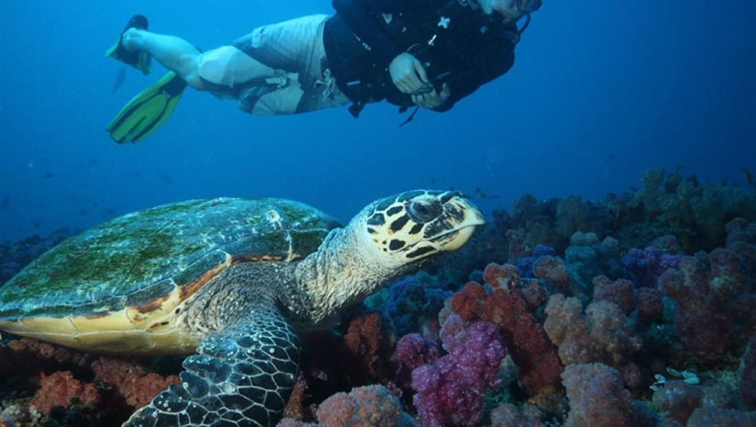 Mozambique - Duiken met zeeschilpad in Indische Oceaan