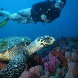 Rondreizen vakanties Mozambique - Duiken met schildpad