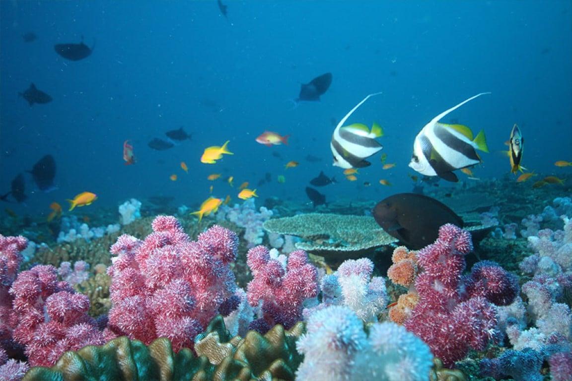 Mozambique - Rif in de Indische Oceaan