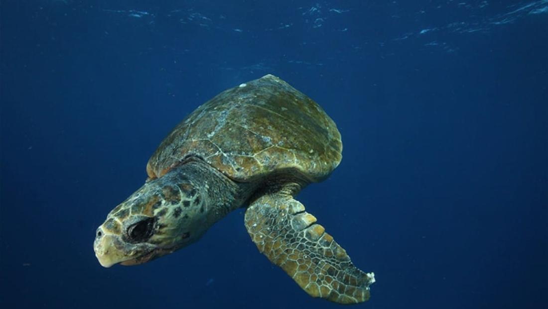 Mozambique - Zeeschildpad in de Indische Oceaan