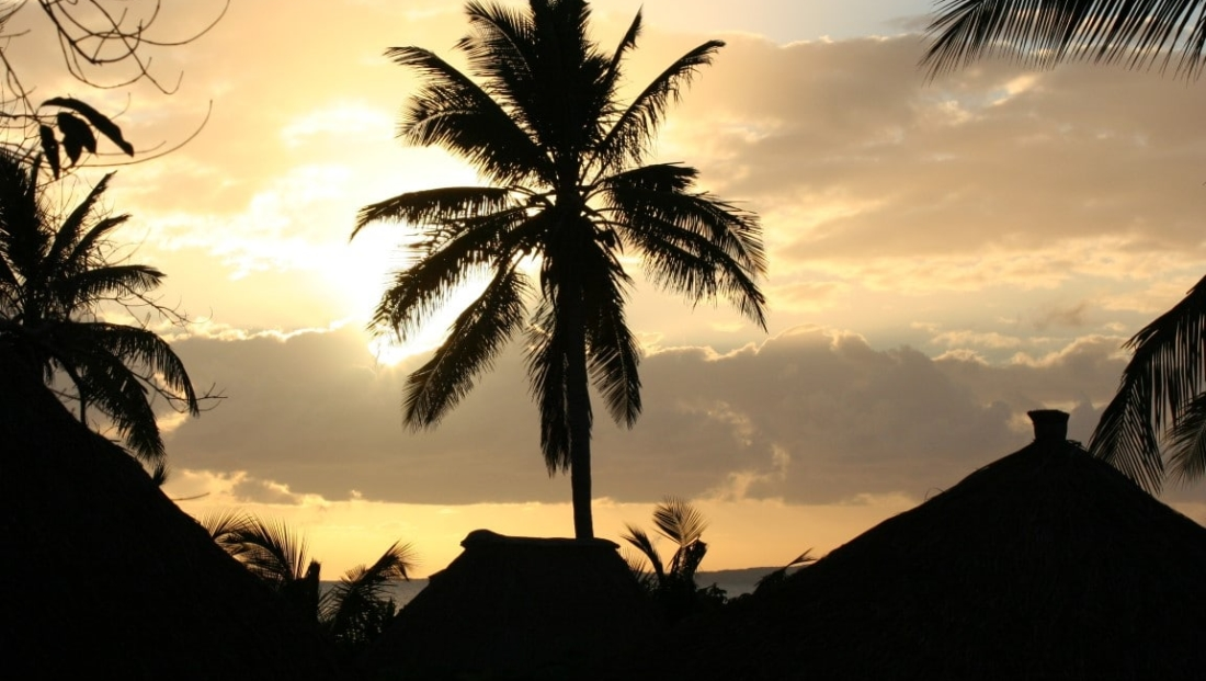 Mozambique - Palmboom silhouet bij zonsondergang