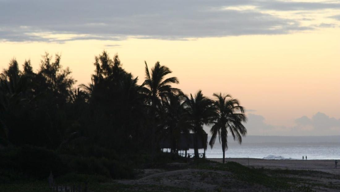 Mozambique - Palmbomen op het strand bij zonsondergang