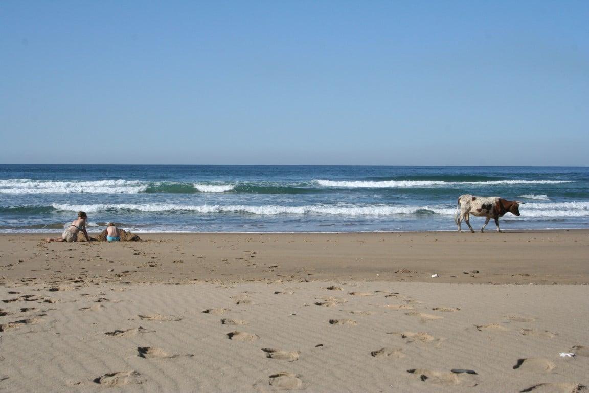 Zuid-Afrika Wild Coast | vakantie | reizen