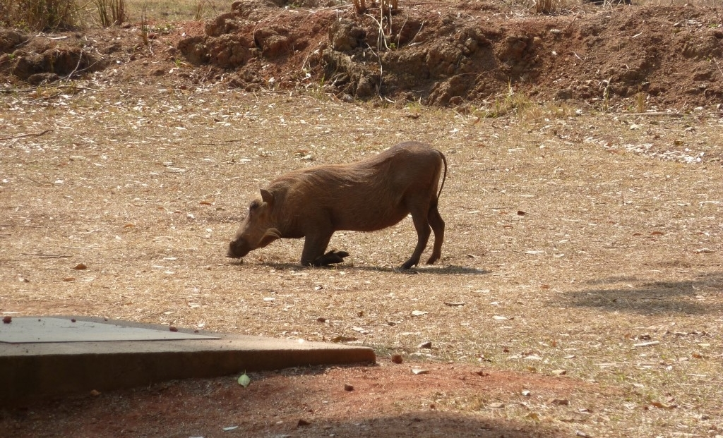 Swaziland (1)