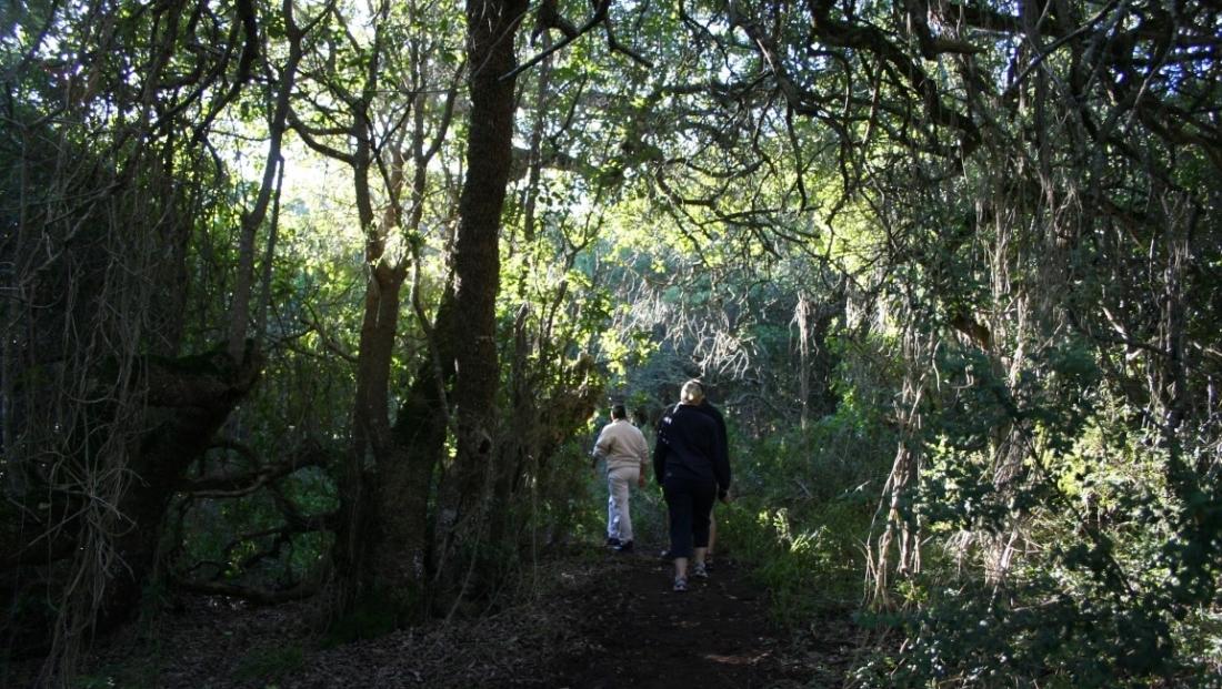 Tsitsikamma National Park (4)