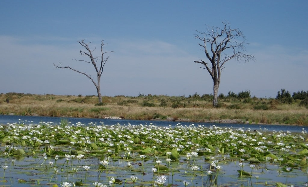 Tsumkwe Lodge - meer met waterlelies