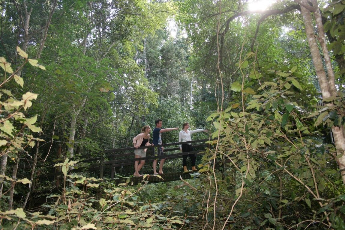 Natuur in Zuid-Afrika - Groene bossen op de Tuinroute