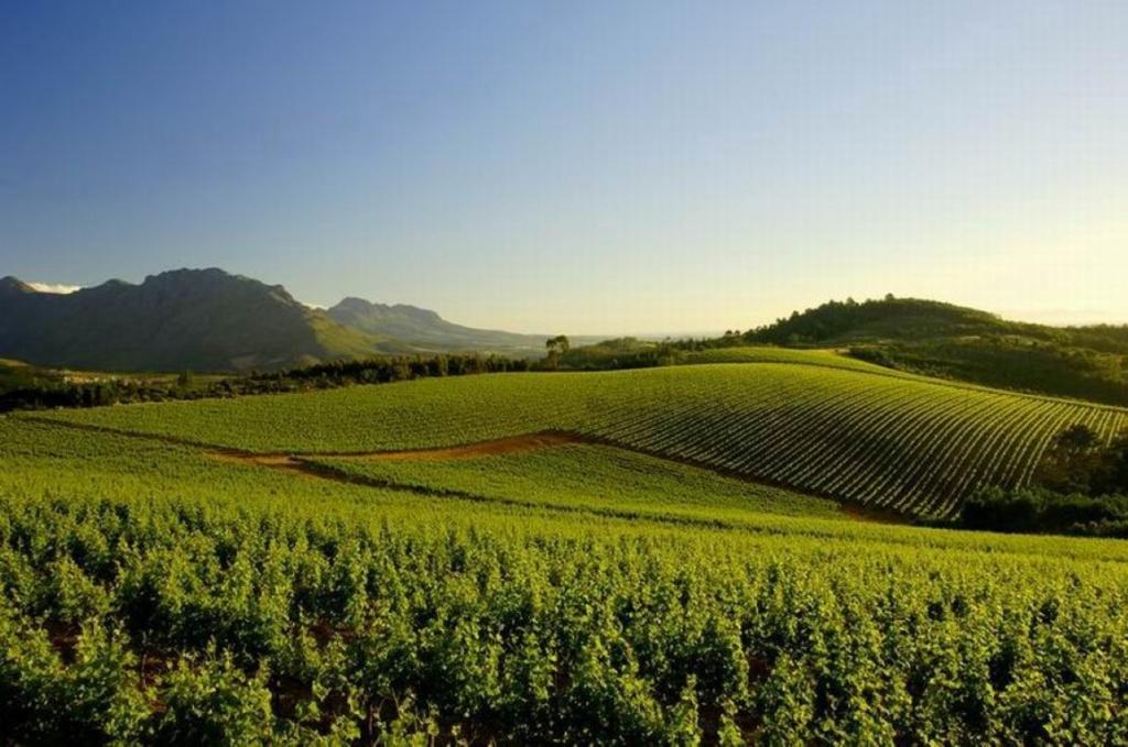 Wijngebied, Zuid-Afrika - Een individuele rondreis in Zuid-Afrika, dit zijn de opties!