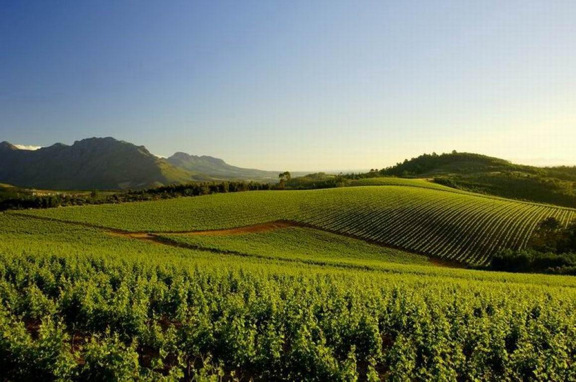 Wijngebied (5)
