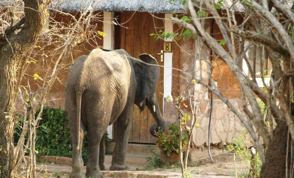 Olifant bij kamp