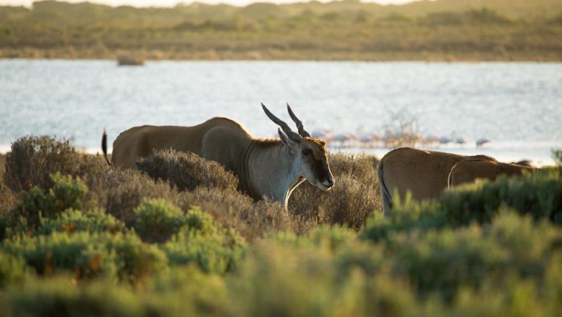 De Hoop Nature Reserve (3)