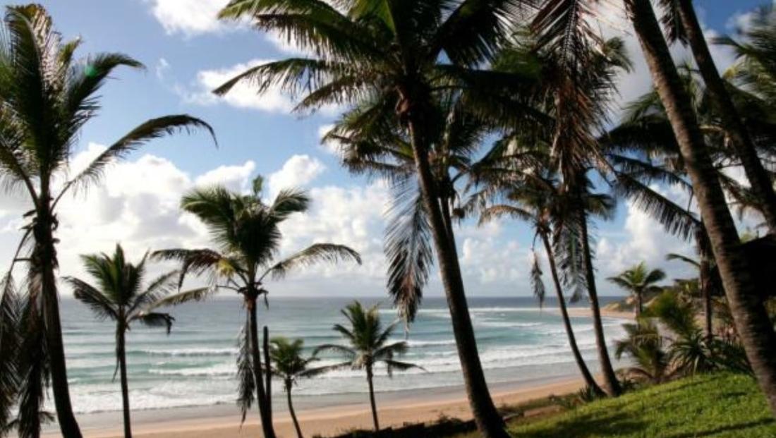 Jeffs Palm Resort - Palmbomen aan het strand