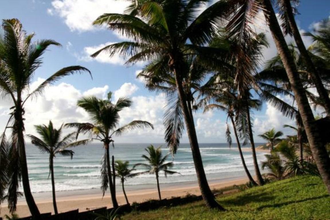 Jeffs Palm Resort (3)