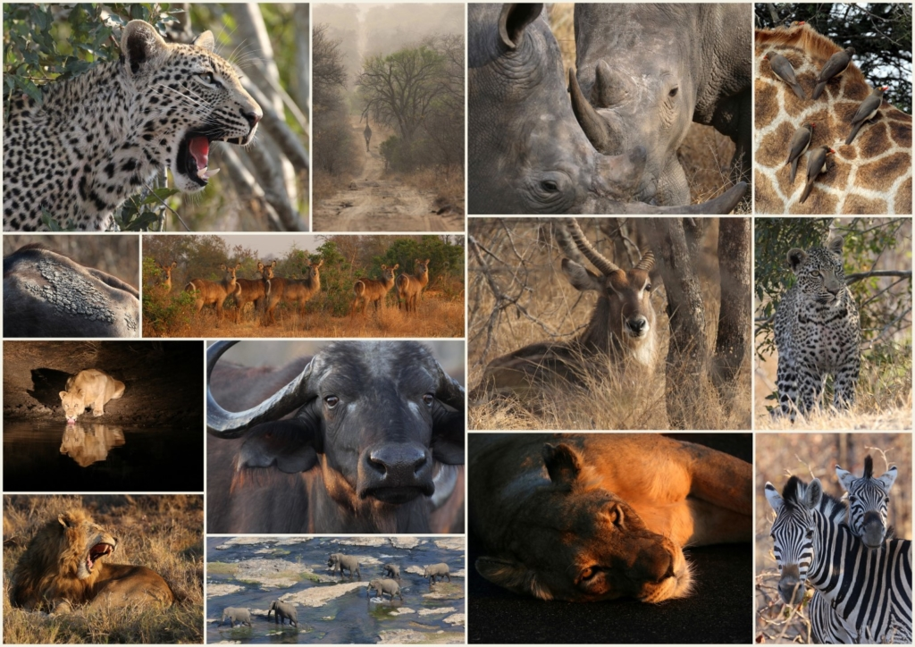 2014 Best of Africa (Large)