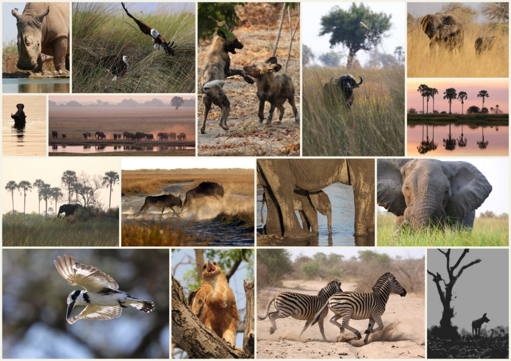 2014 Best of Africa1 (Large)