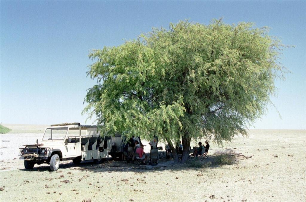 Bushways - Lunchstop in de schaduw van een boom