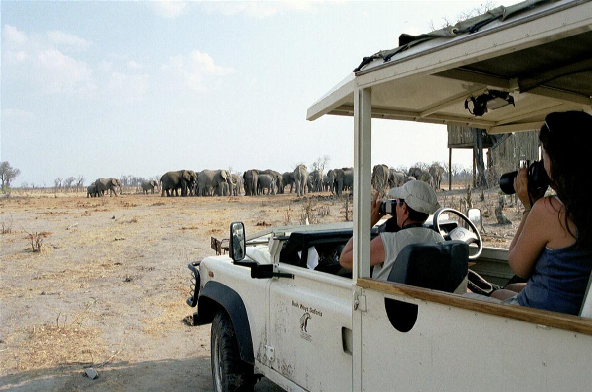 Safari & Strand reizen Afrika - Olifanten tijdens wildrit van groepskampeersafari in Botswana