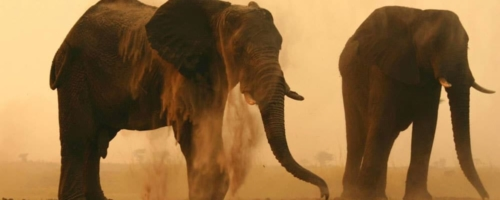 Twee olifanten Chobe Elephant Camp