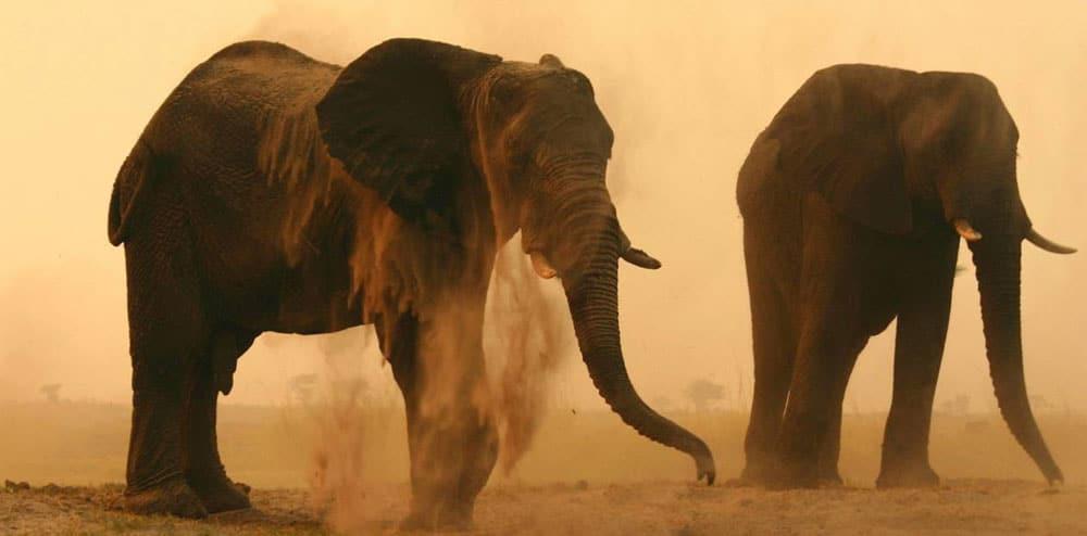 Chobe Elephant Camp - Twee olifanten in het zand en stof