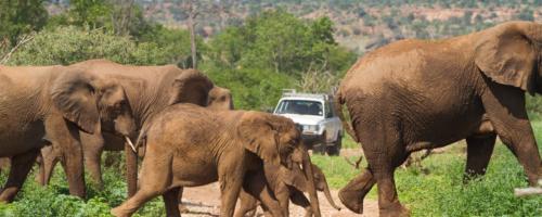 Olifanten Mapungubwe