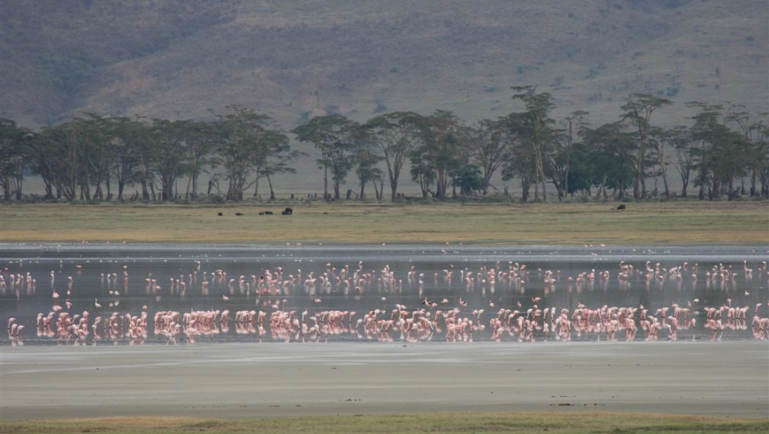 Ngorongoro crater - flamingo's