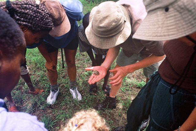Schildpadje Afrika Rangercursus