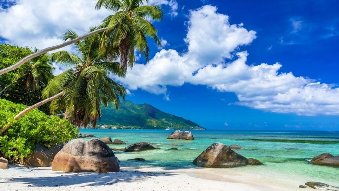 Seychellen Strand - strand met palmbomen