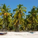 Palmbomen Mozambique