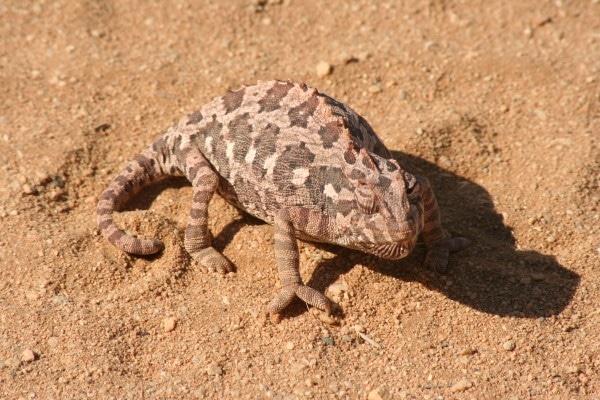 Rondreizen Namibië - Op zoek naar leven in de woestijn bij Swakopmund.
