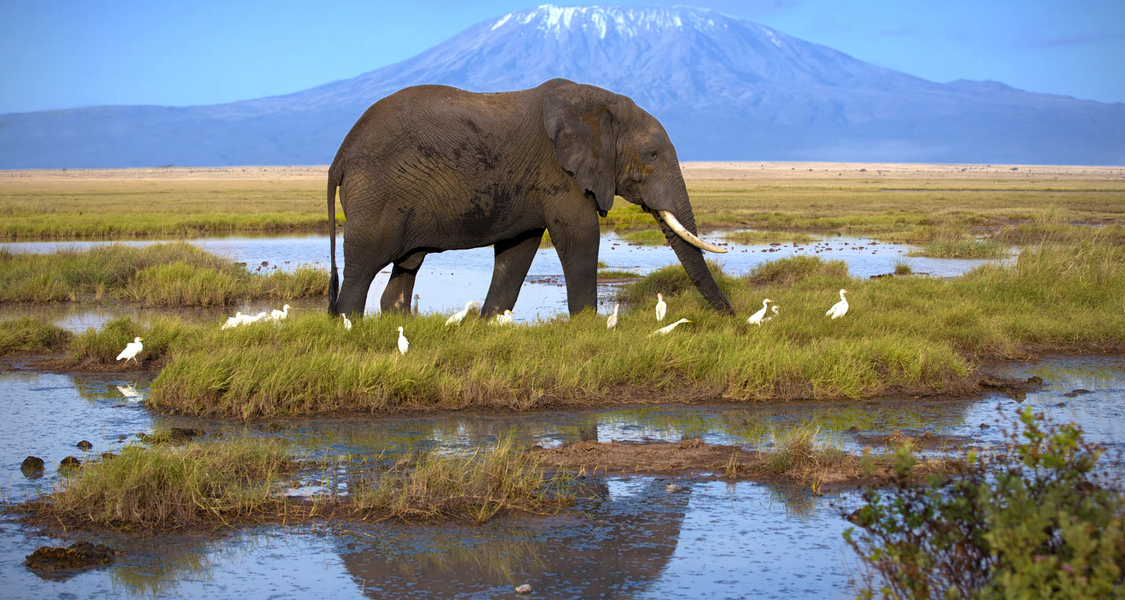Kilimanjaro - olifant