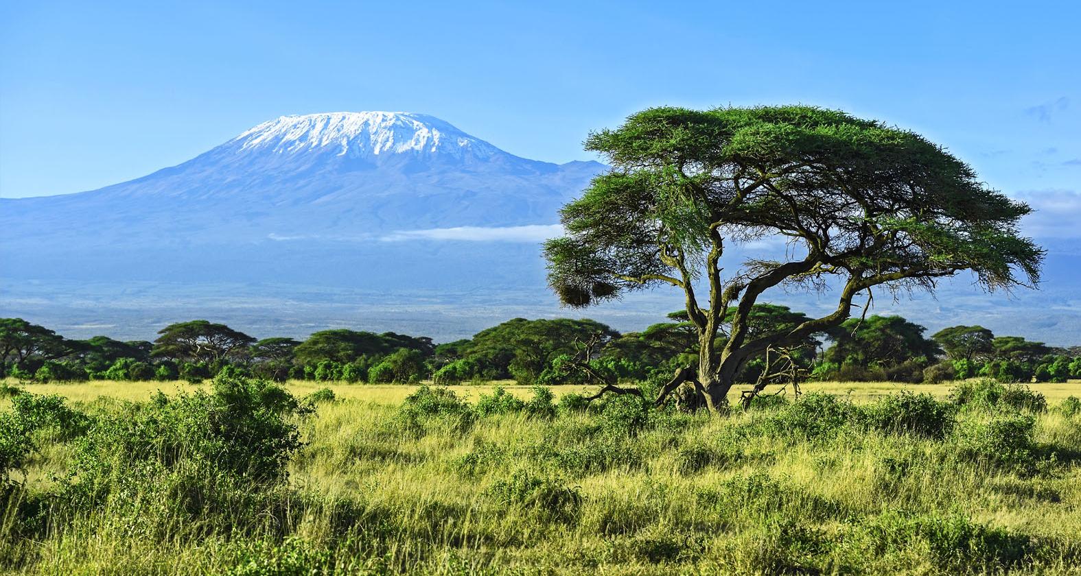 Kilimanjaro - groene vlakte