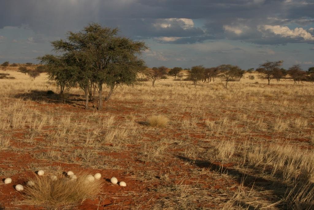 2009-1-00 Kalahari 1 225