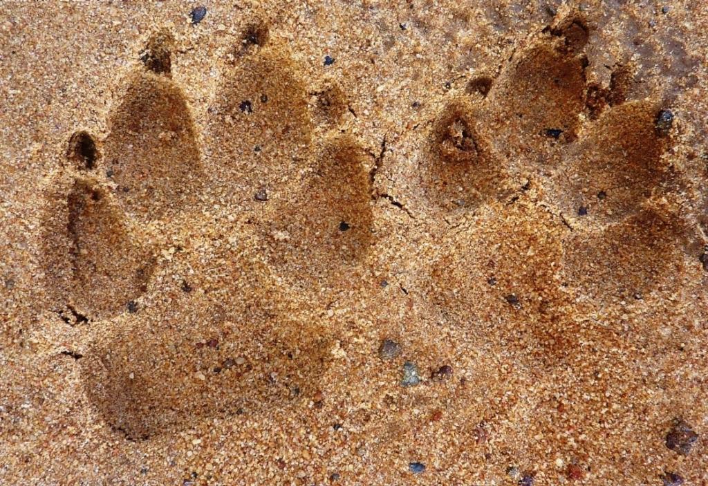 Sporen lezen in Afrika - Op wandelsafari in Zuid-Afrika