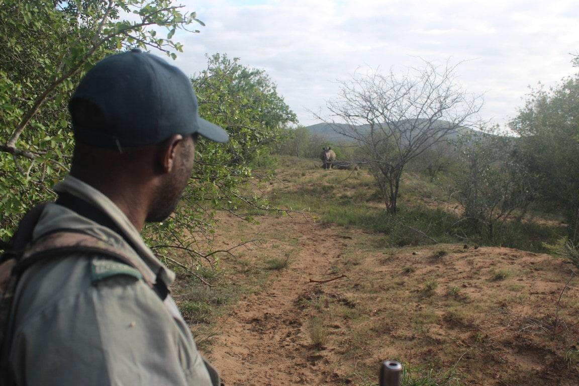 Nieuwsbrief Out in Africa - Op pad met de Big 5, wandelsafari, neushoorn