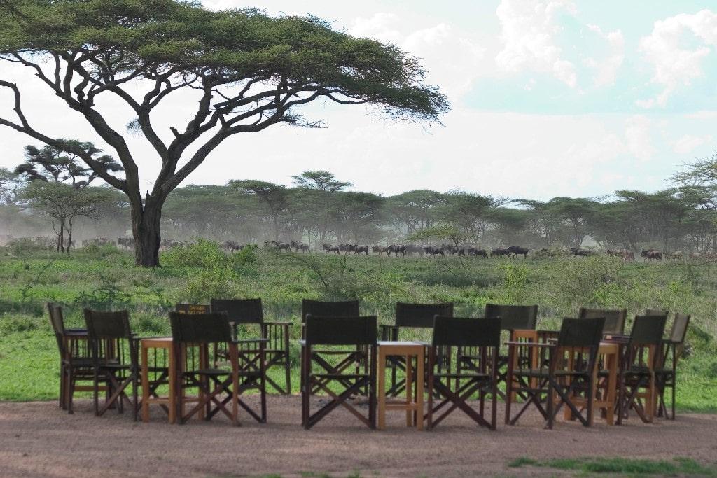 Individuele reizen Tanzania - Ook buiten de officiele parkgrenzen zijn dieren te zien.