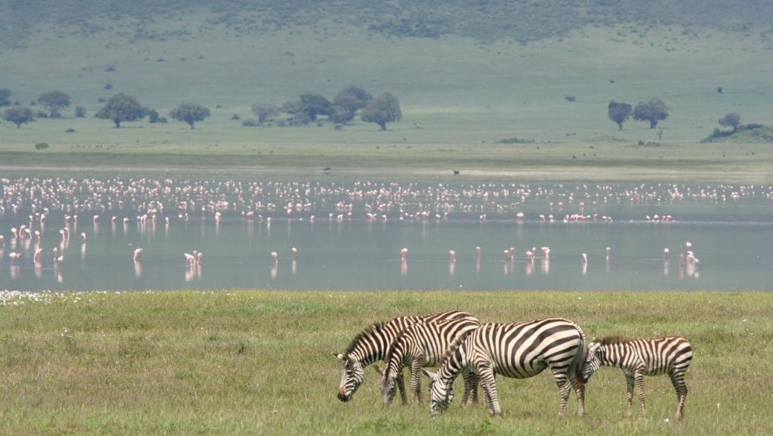 Ngorongoro Krater - zebra's en flamingo's