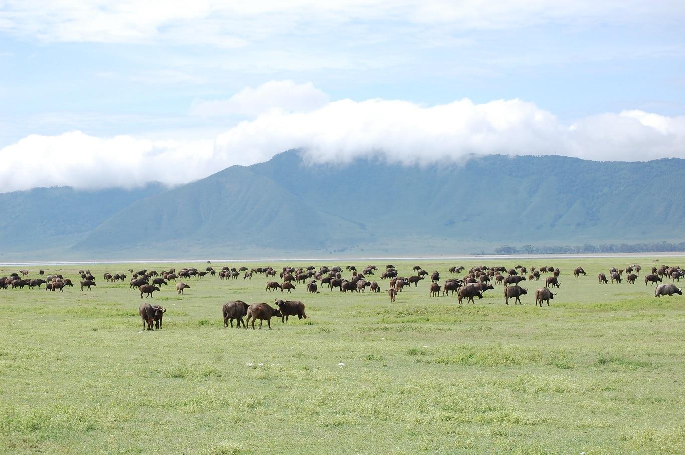 Rondreizen Tanzania - De wildrijke bodem van de Ngorongoro Krater.