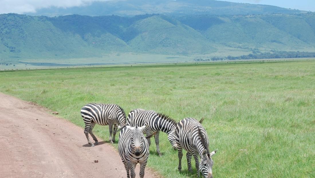 Ngorongoro Krater - zebra's