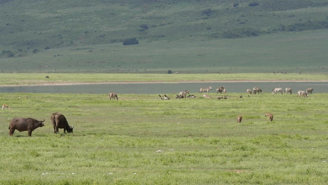 Ngorongoro Krater - diverse dieren