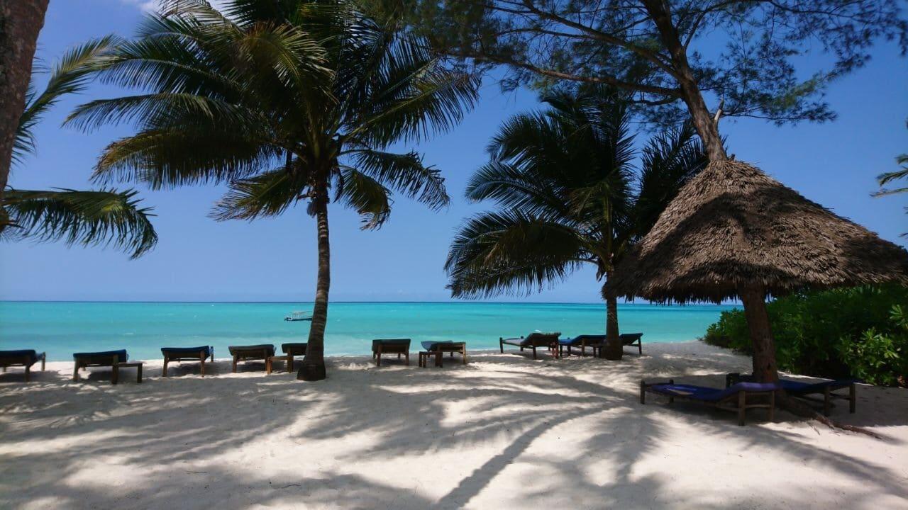 Safari en strand reizen Tanzania - In de schaduw onder de palmbomen op een warme Zanzibar dag