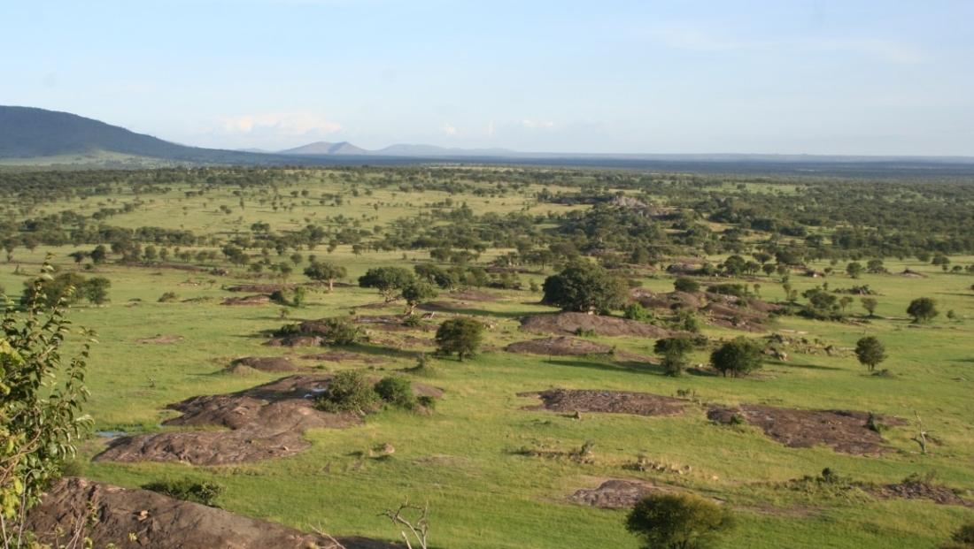 Serengeti NP - landschap