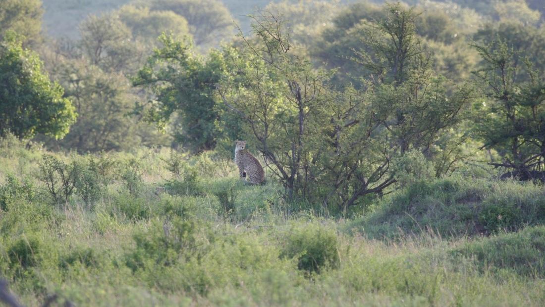 Serengeti NP - luipaard