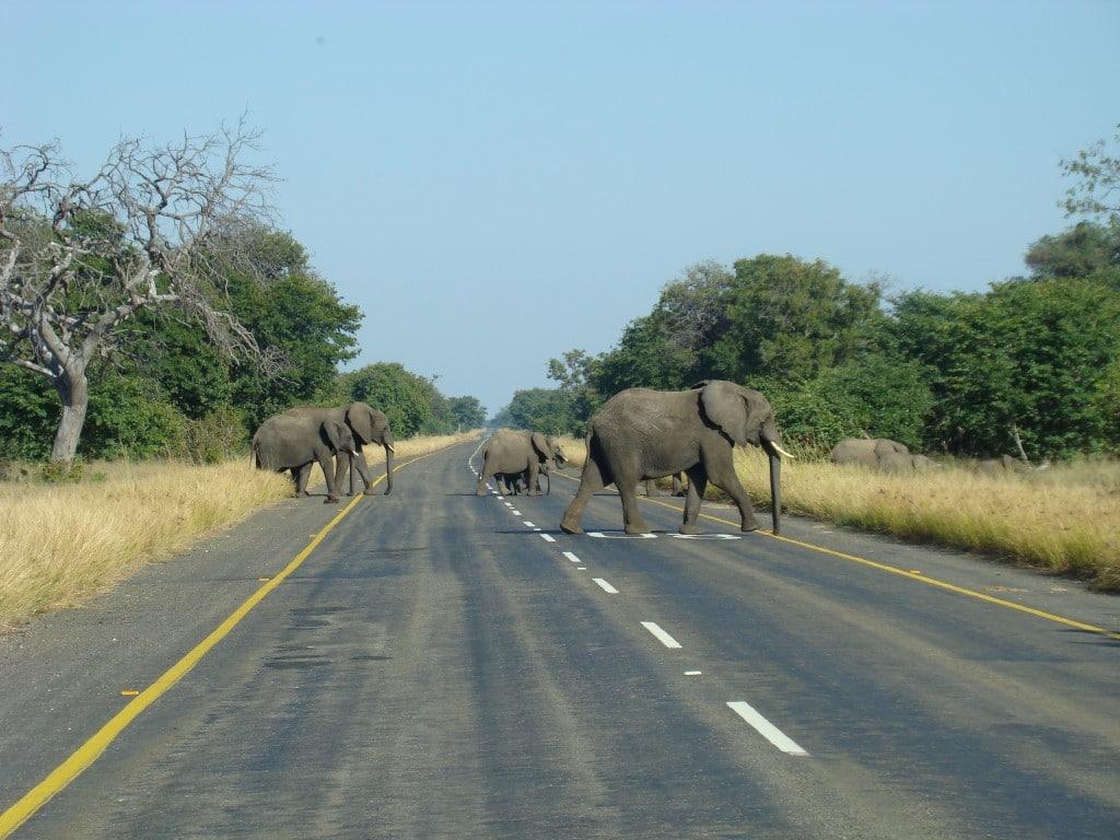 Olifanten, Big Five, Botswana - Op vakantie naar Botswana? Dit moet je gezien hebben!