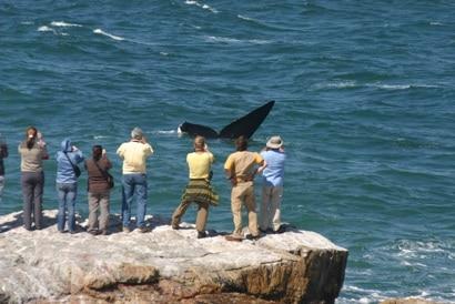Een kindvriendelijke vakantie in Zuid-Afrika - walvissen, Hermanus, Kaap, Zuid Afrika