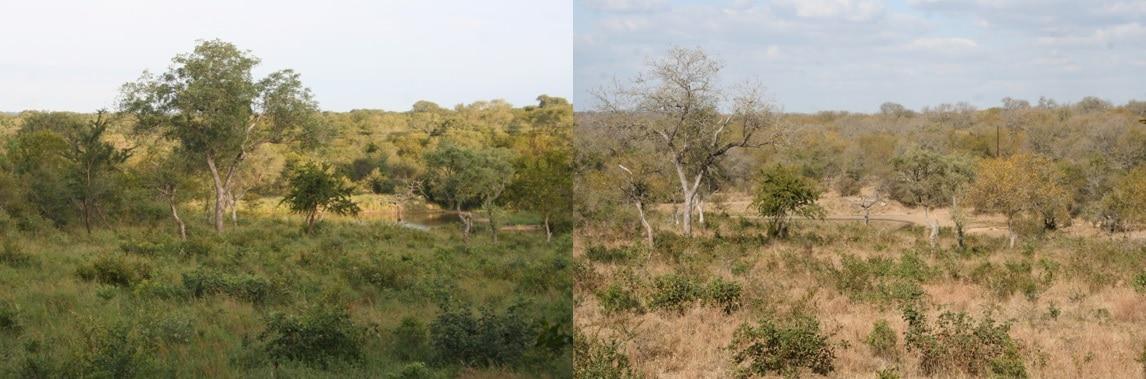 Wanneer kun je het beste naar Zuid Afrika - zomer vs winter, Thornybush, Zuid Afrika