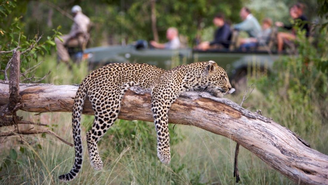 Elephant Plains - Cheetah