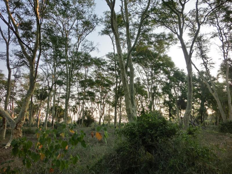 Fever Tree Forest, ongerept, Krugerpark, Zuid-Afrika - Een individuele rondreis naar Zuid-Afrika, dit zijn de opties!
