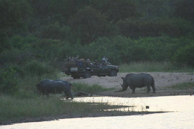 Neushoorns, privé safari, Zuid-Afrika - Een individuele rondreis in Zuid-Afrika, dit zijn de opties!