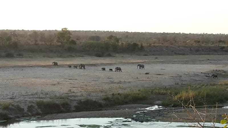 Olifanten, Krugerpark, Safari, Zuid-Afrika - Een individuele rondreis in Zuid-Afrika, dit zijn de opties!