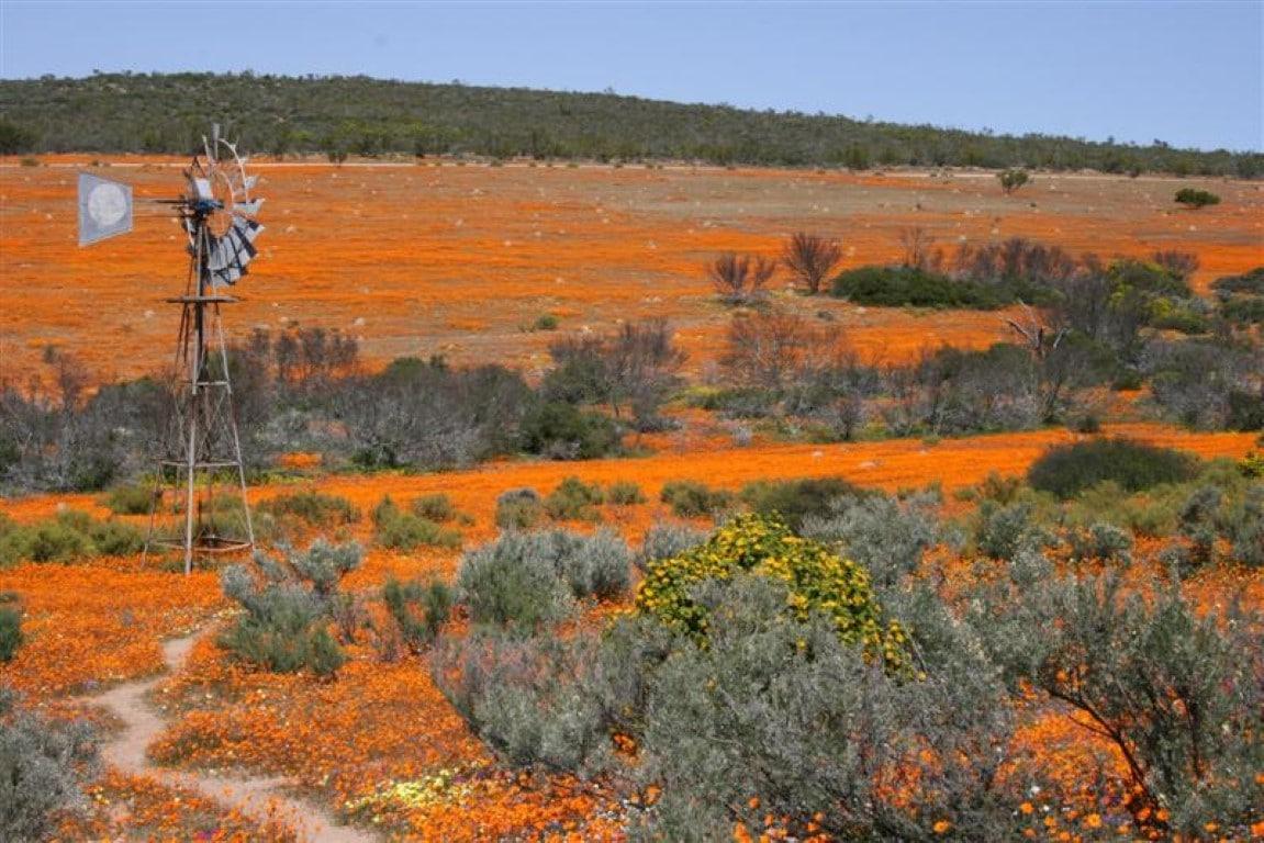 Nieuws uit Afrika, Namaqualand Zuid-Afrika